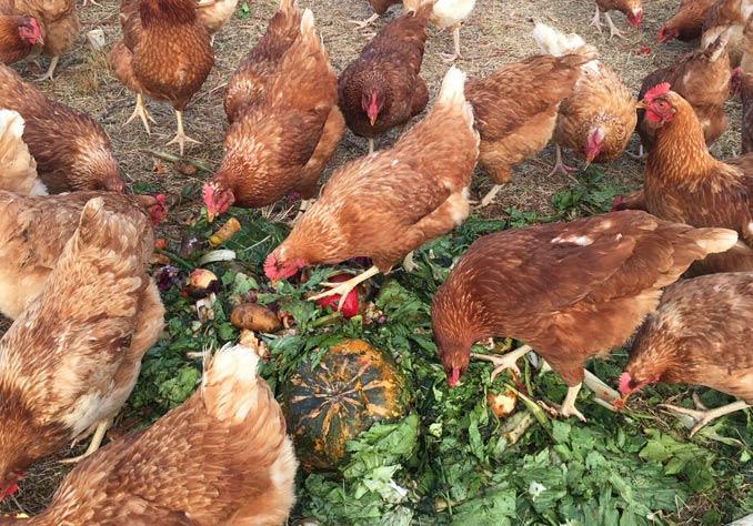 Abundance Farm