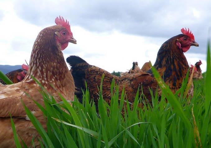 banticks farm