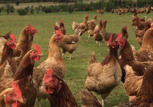Buckleys Farm