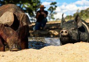 dewsbury pork