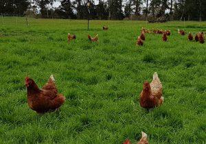 Dheavii Farms