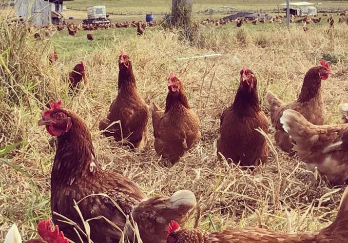 Dunromin Farm