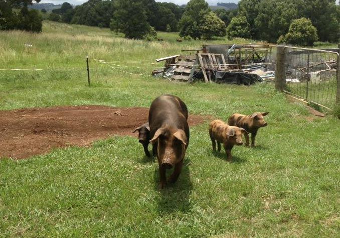 esperenza farm