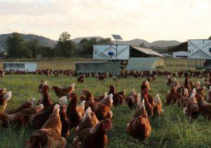 forage farms