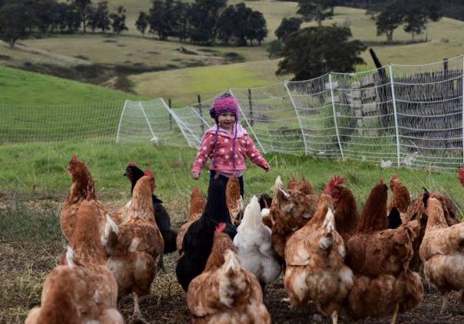 hillcrest farm organics