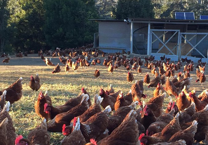 IdleWilde Farm