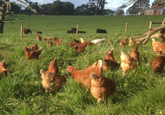 Kilmorack Farm