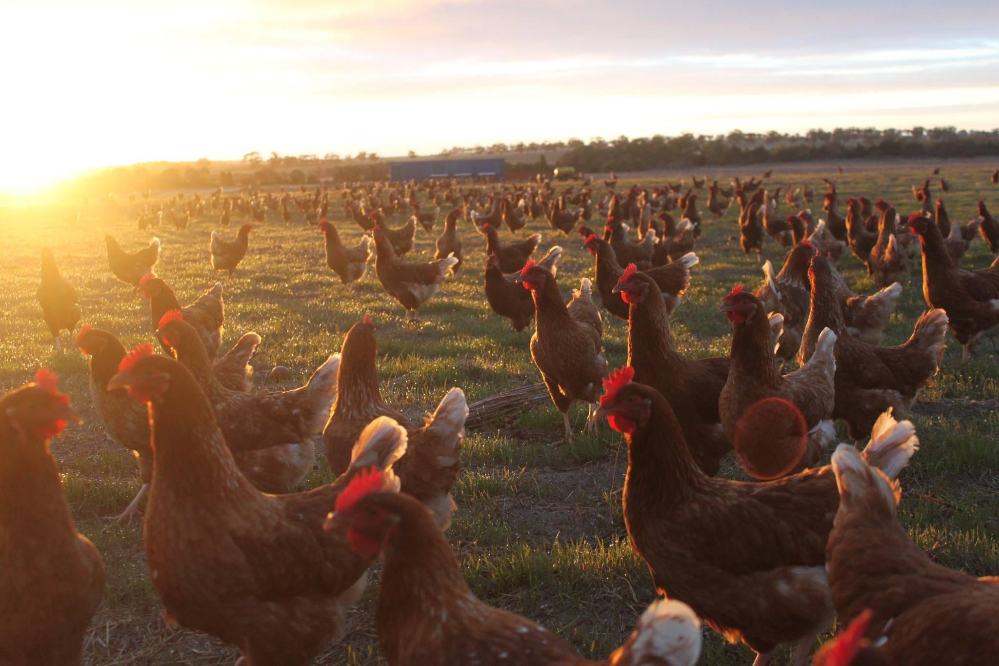 manavi farm