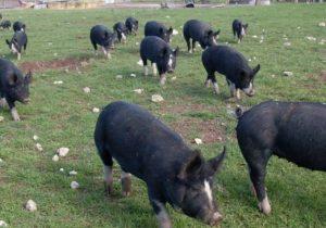 minniribbie farm