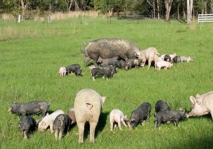 mirrabooka pork
