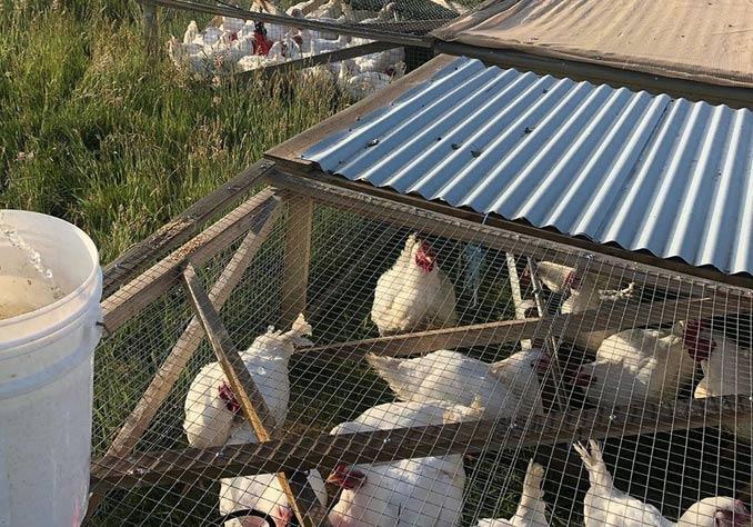 taranaki farm