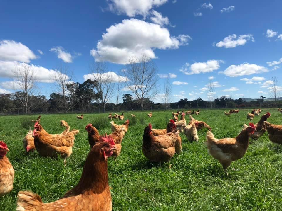 The Happy Hens Eggs