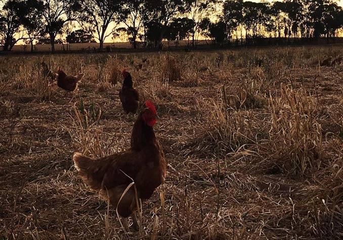 westwalla farm