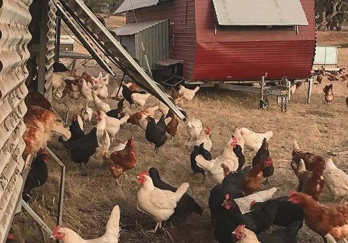 falkai farm